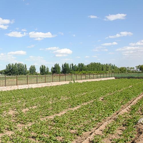 包头蔬菜基地